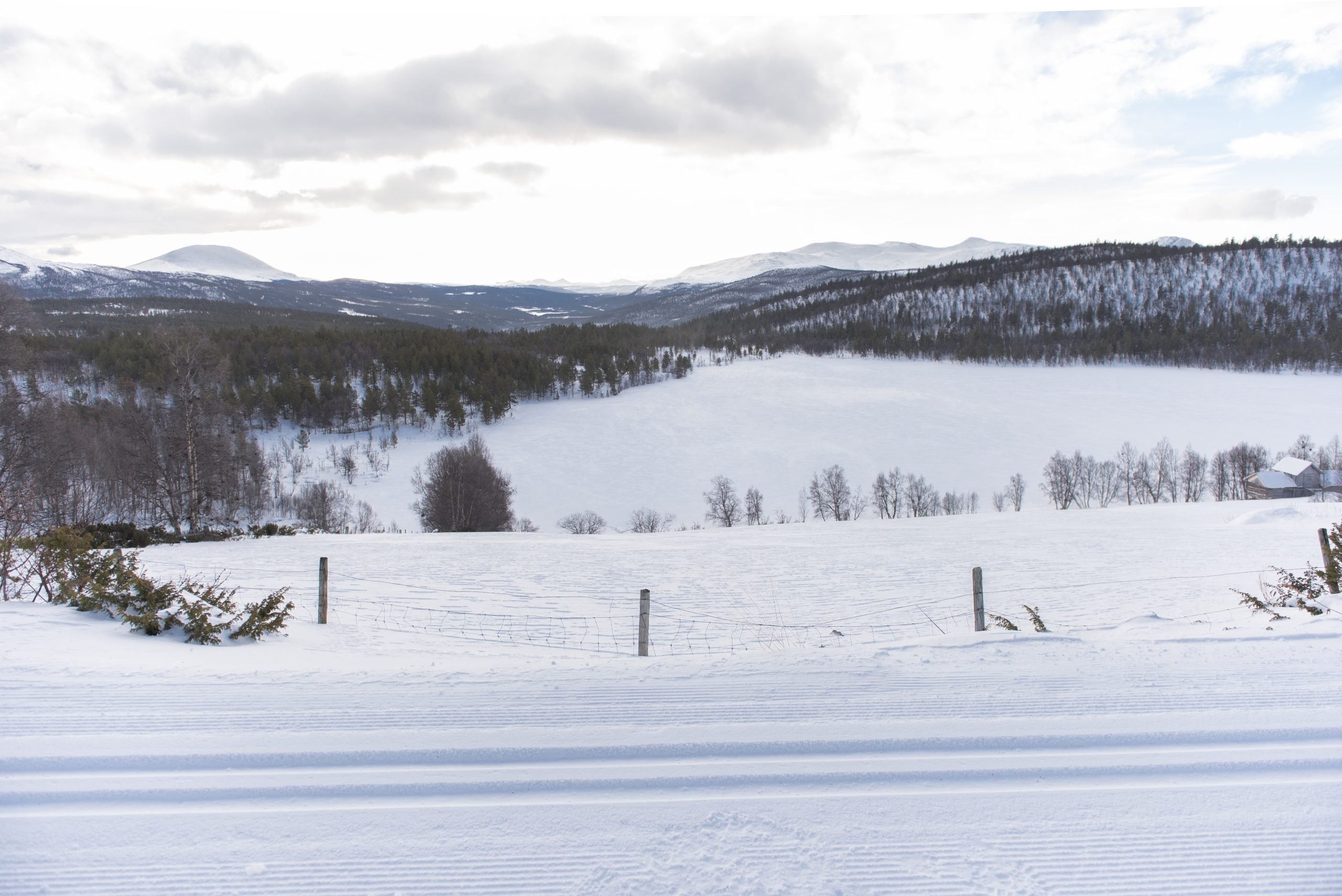 DSC_2634 Foto Terje Rakke Nordic Life